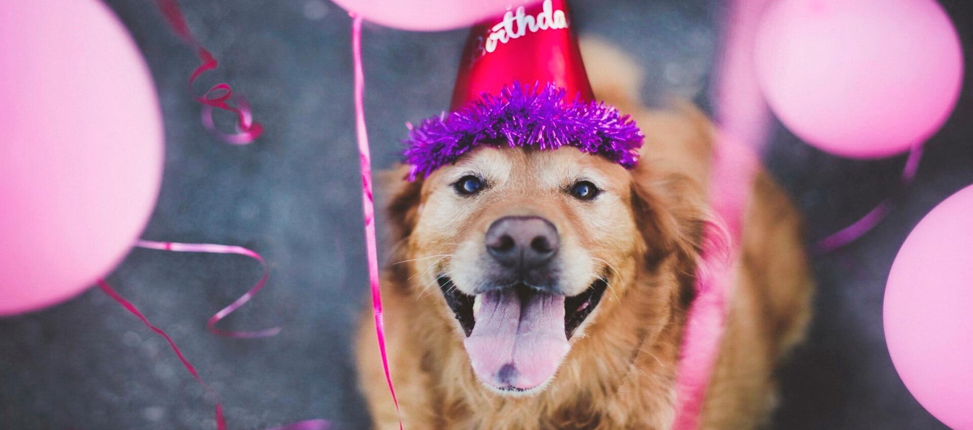 Foto: Aniversário Pet